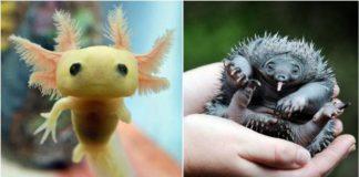 Rare Baby Animals 1