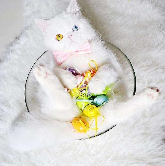 Kitten-With-Heterochromia-1