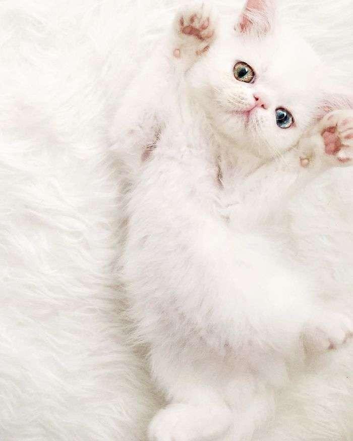 Kitten-With-Heterochromia-5