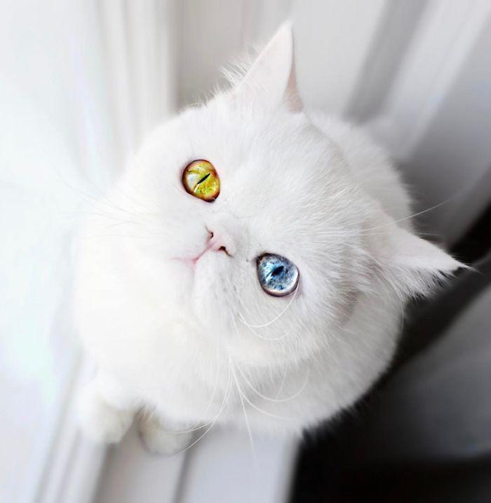 Kitten-With-Heterochromia-6