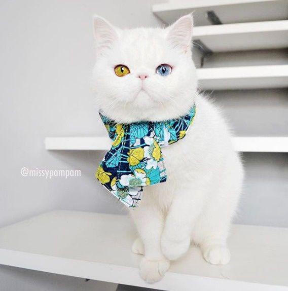 Kitten-With-Heterochromia-8