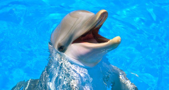 Smart-Animal-Bottlenose-Dolphins