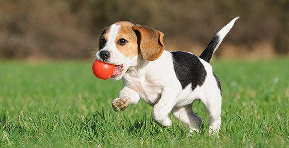 Smart-Animal-Dog
