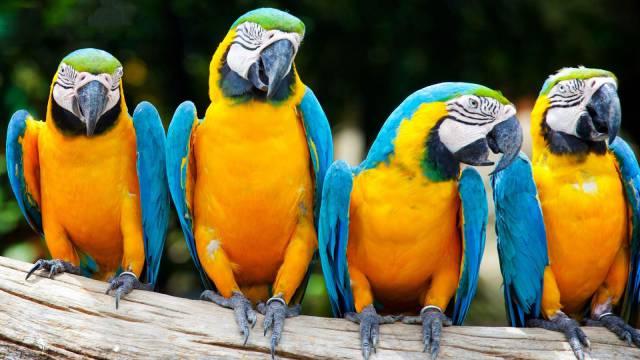 Smart-Animal-Parrots