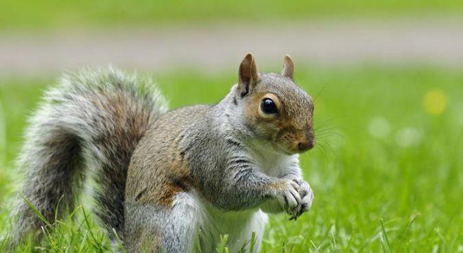 Smart-Animal-Squirrels