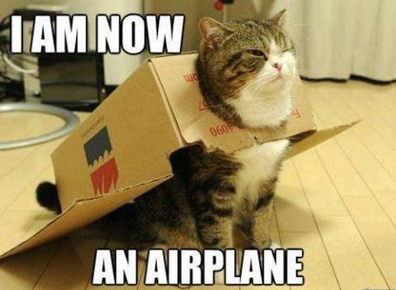 Funny-Cat-Memes-11