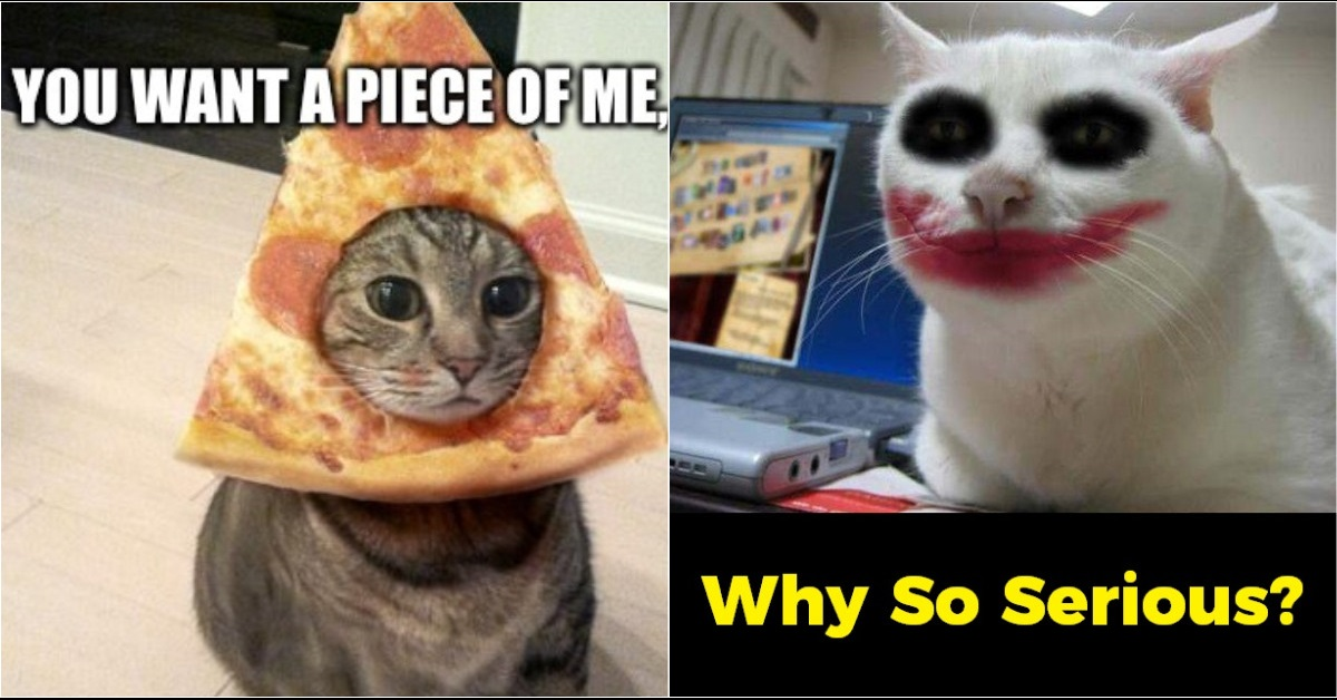 10 funny cat memes that will make you go rofl