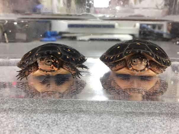 See-Faces-Pareidolia-2
