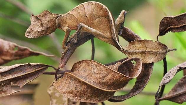 Animal-Camouflage-2