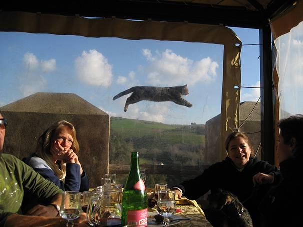 Hilarious-Cat-Photobombs-1