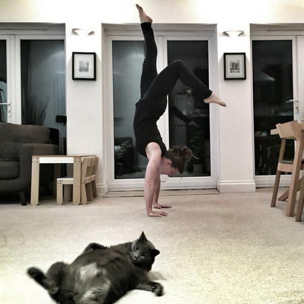 Hilarious-Cat-Photobombs-10