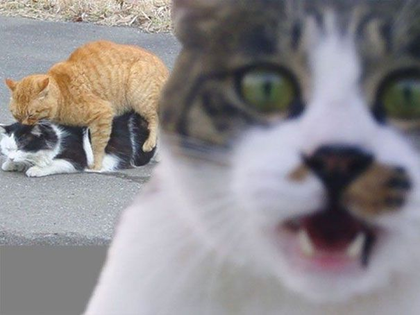 Hilarious-Cat-Photobombs-3
