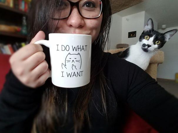 Hilarious-Cat-Photobombs-4