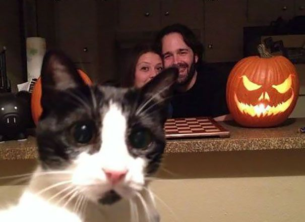 Hilarious-Cat-Photobombs-6