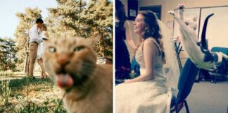 Hilarious Cat Photobombs