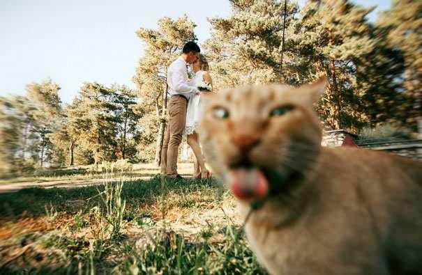 Hilarious-Cat-Photobombs-8