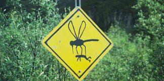 Mosquitoes Bite