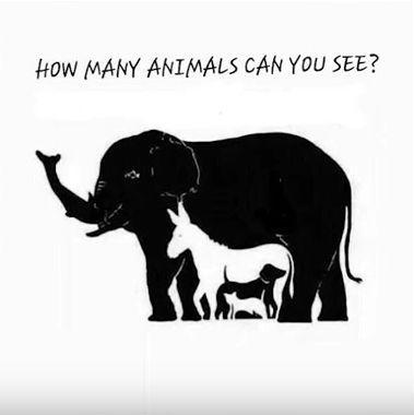 Animals-3