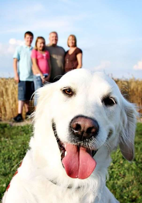 Funniest-Dog-Photobombs-3