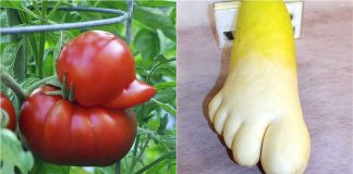 Oddly Shaped Fruits-Vegetables (10) High Protein Vegetables