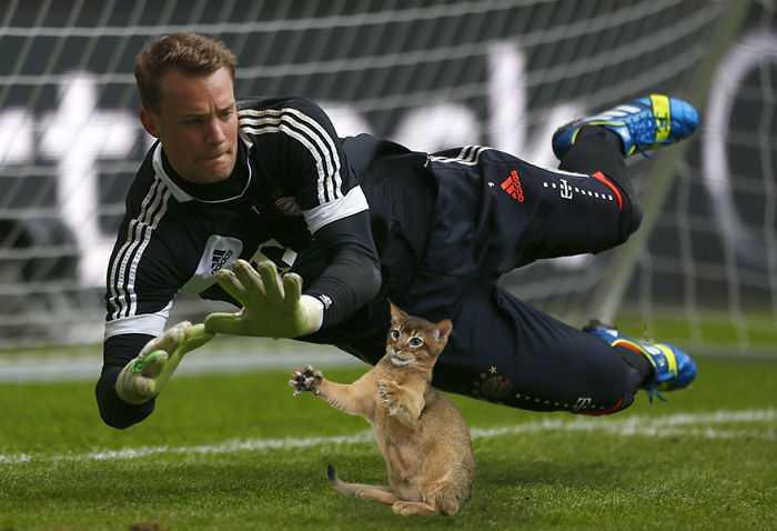 Photoshopping-Cats-into-Football-1