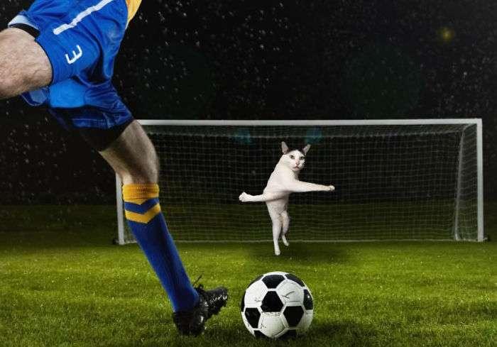 Photoshopping-Cats-into-Football-3