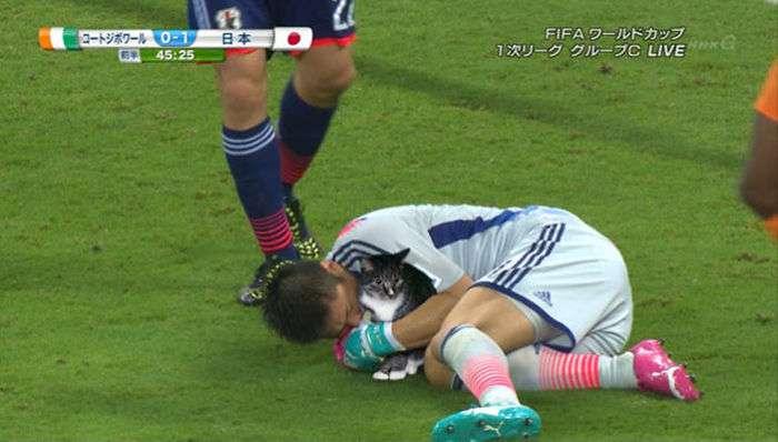 Photoshopping-Cats-into-Football-5