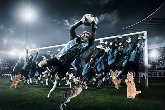 Photoshopping-Cats-into-Football-6