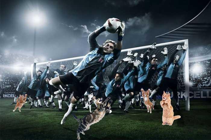Photoshopping-Cats-into-Football-6