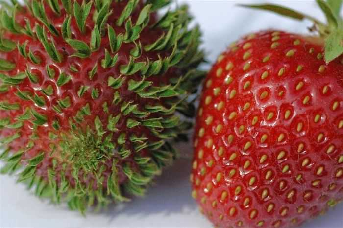 Fruits-Vegetables-Sprout-4