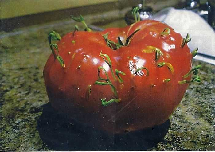 Fruits-Vegetables-Sprout-5