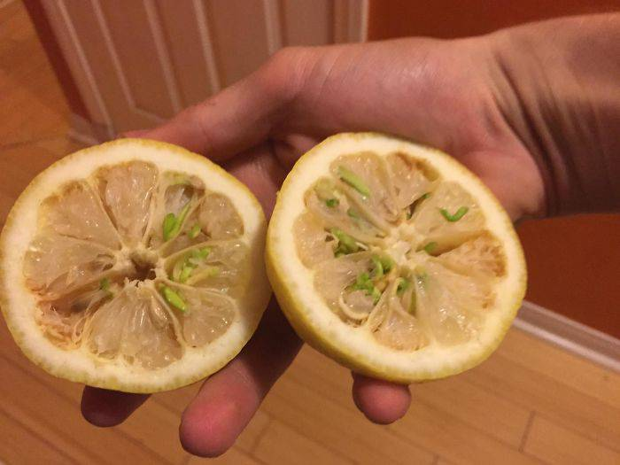 Fruits-Vegetables-Sprout-8