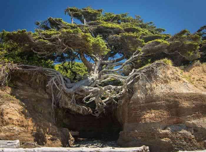 Inspiring-Trees-1