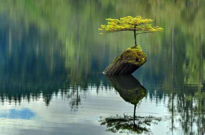 Inspiring-Trees-4