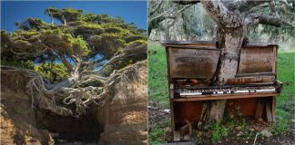 Inspiring Trees