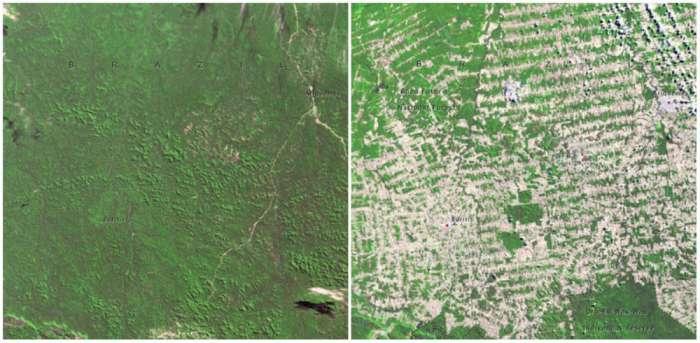 Rondonia-Brazil