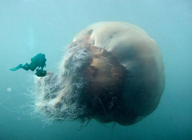 Terrible-Sea-Photos-8